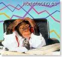 Mono loco en Homotecno